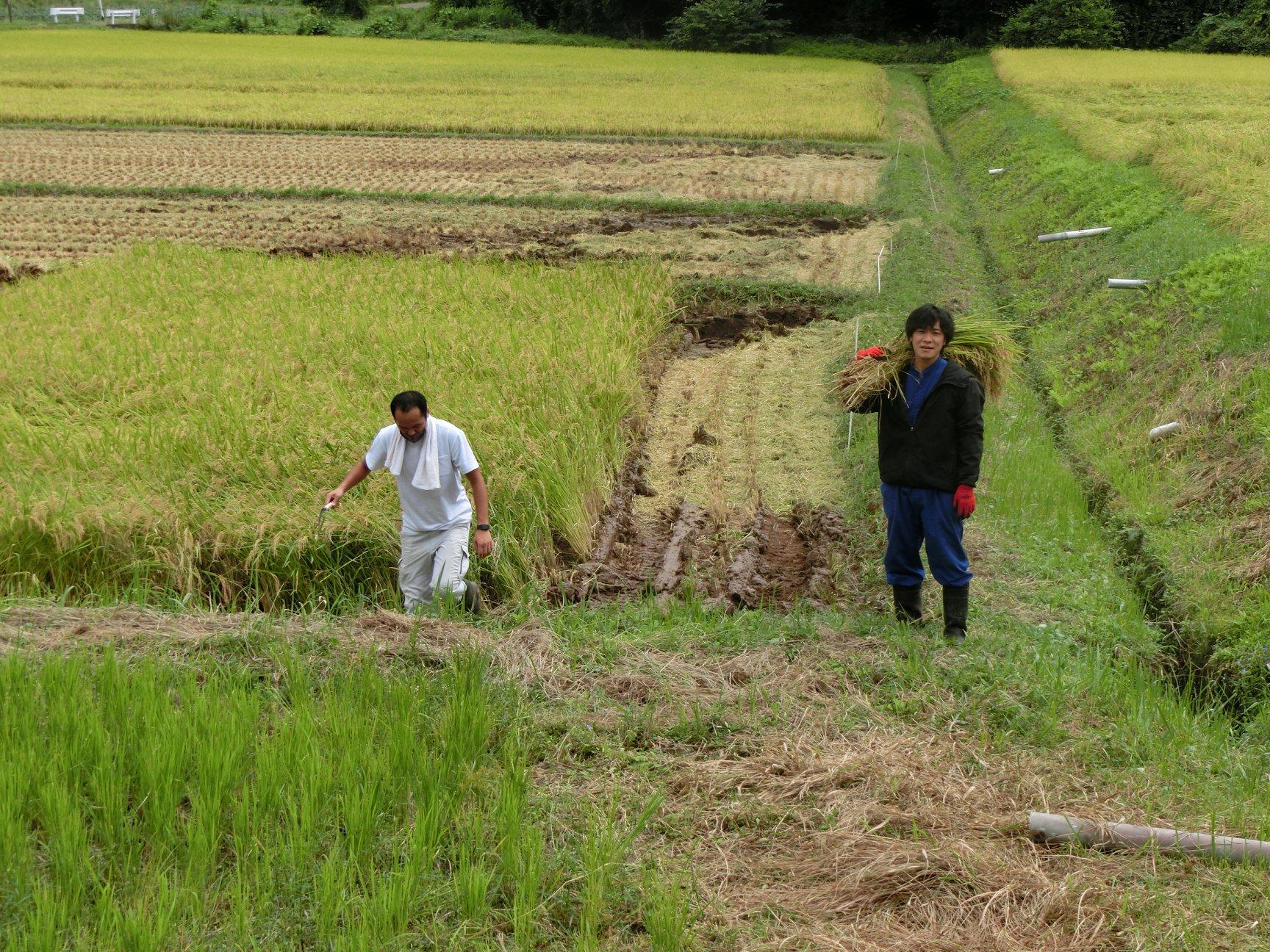 令和2年9月20日 坪沼地区で稲刈り作業がはじまりました。
