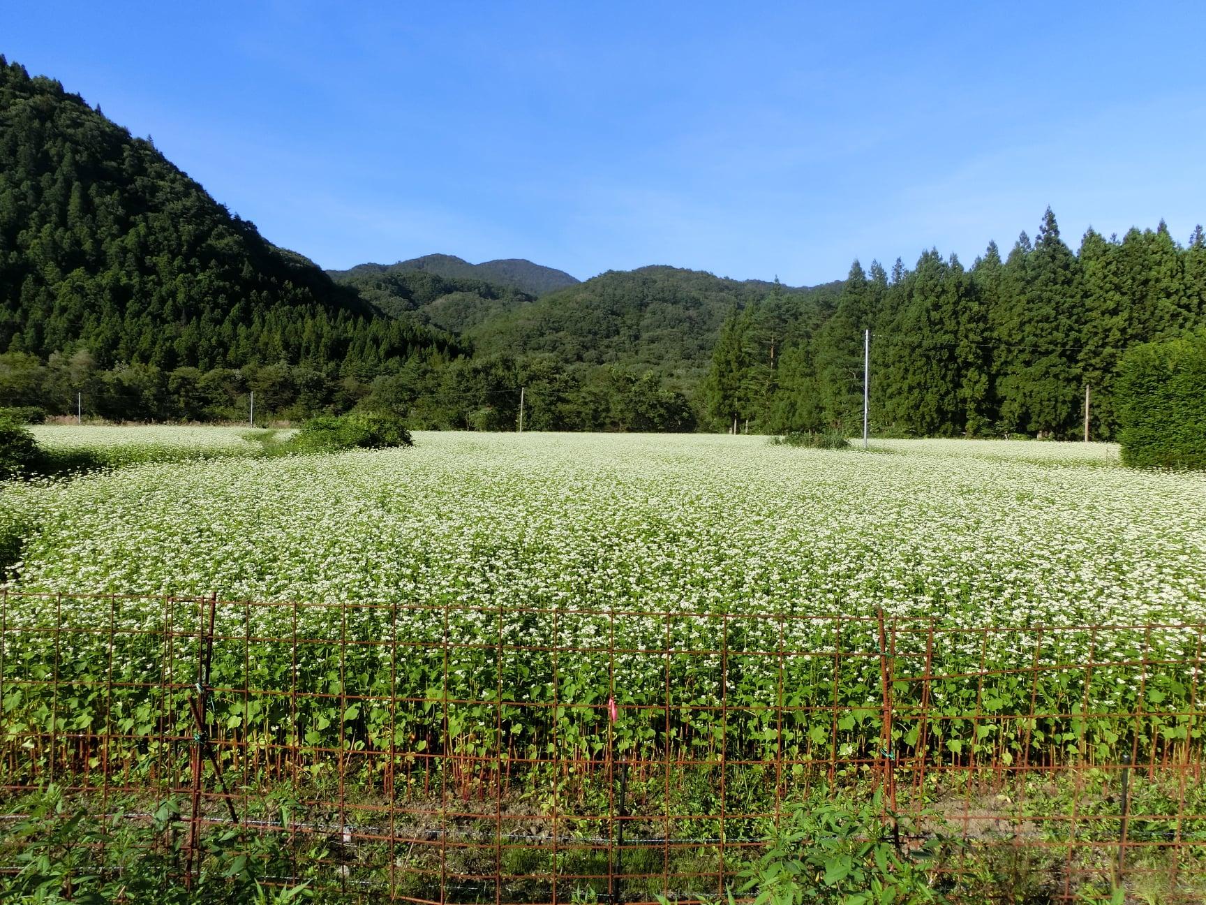 令和3年9月20日敬老の日 秋保町馬場地区に調査に出向きました。